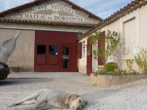 Vineyard Tour : even the dogs get worn out from all the samples!