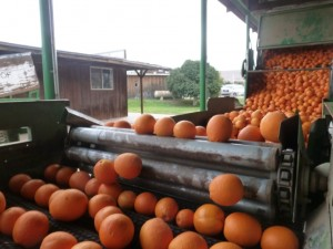 orangepatch