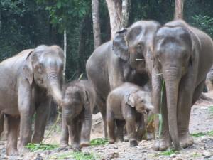 Patara Elephant Farm; Chiang Mai